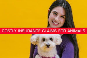 5 highest costly insurance claims for animals.