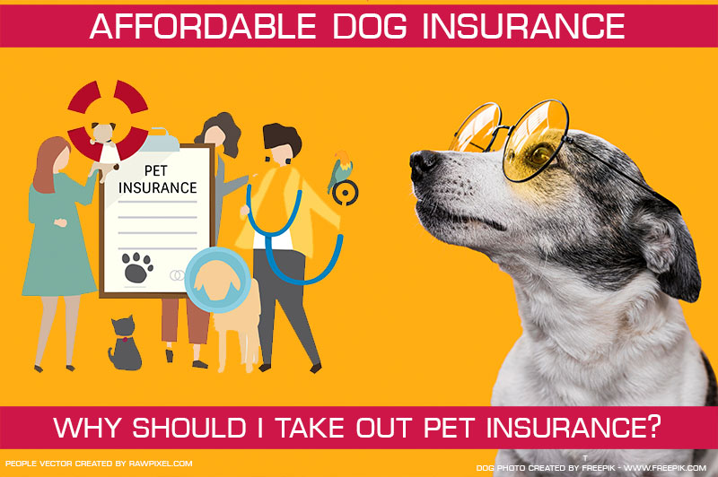Why should I take out pet insurance?